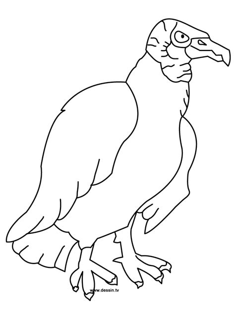 turkey vulture coloring page coloring vulture