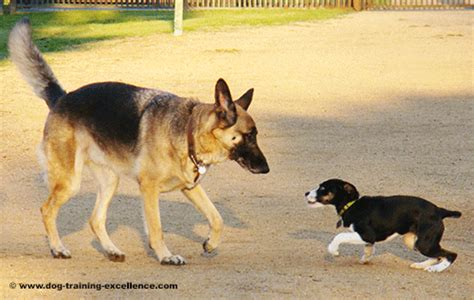 how to get a yorkie puppy to stop biting how to get a german shepherd to stop barking photo