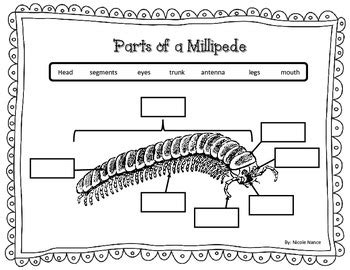 labelled diagram of a millipede millipede parts label by nance teachers pay