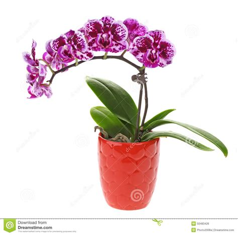 Bunch Of Flowers In A Vase Purple Orchid Flower In Pot Stock Photo Image 50483426