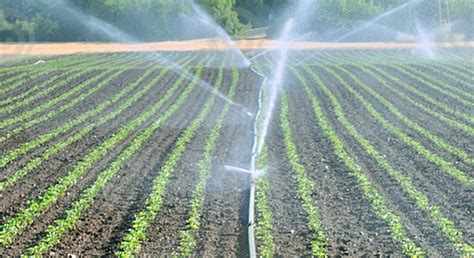 Home Design Company In Thailand by Micro Irrigation Systems Importers Sri Lanka Drip