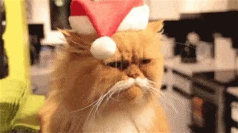 Cat Meme Gif - cat christmas gif cat christmas santa discover share