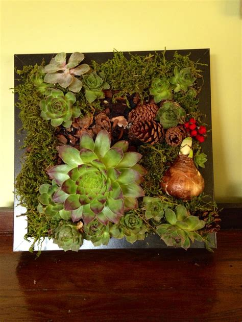 Succulent Wall Garden For Sale 86 Best Images About Succulents Wall On