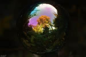glaskugel garten glaskugel garten spiegelung baum farn
