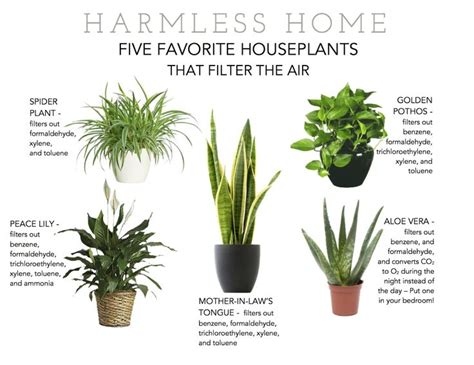 best plants for apartment air quality favorite houseplants that filter the air houseplants