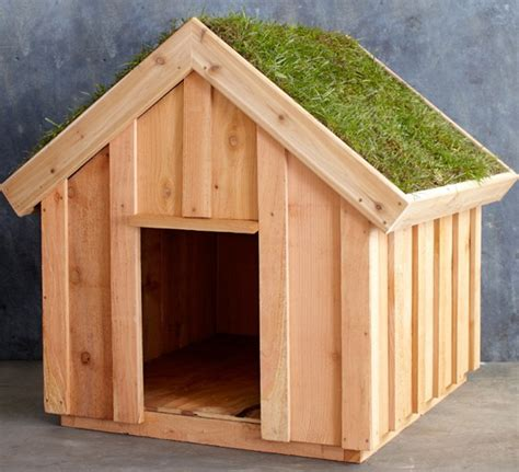 green dog house when being in the dog house isn t so bad incredible things
