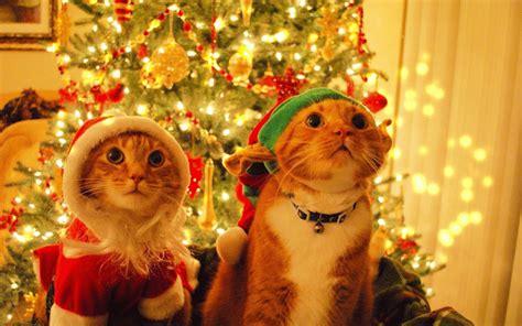 imagenes de feliz navidad para hombres animalicos gatos graciosos perros chistosos fotos