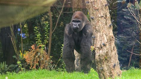imagenes animales del zoo zoologico de chapultepec animales www pixshark com