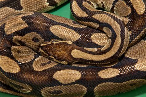 python image python san diego zoo animals plants