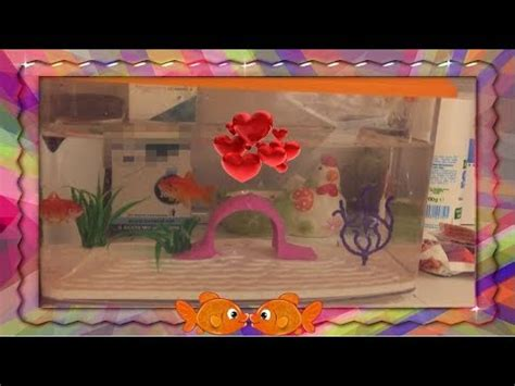 vasca pesce rosso pesce rosso pulire la vasca