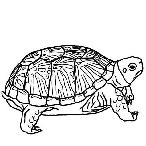 pond turtle coloring page free printable turtle coloring pages for kids animals