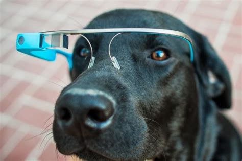 new technology for dogs google glass technology has gone to the dogs literally