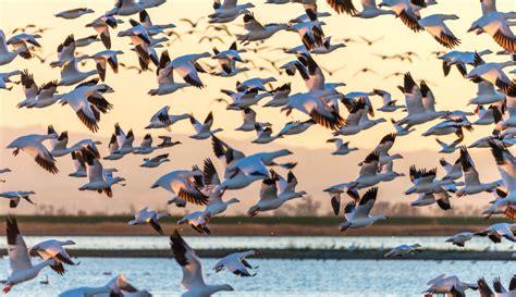 drupal 8 migration migrating basic data part 1