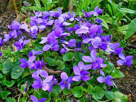Fleur Violette by Fleurs La Violette