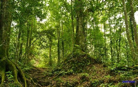 film manusia ular penghuni hutan mewariskan hutan indonesia sebagai surga masa depan bangsa