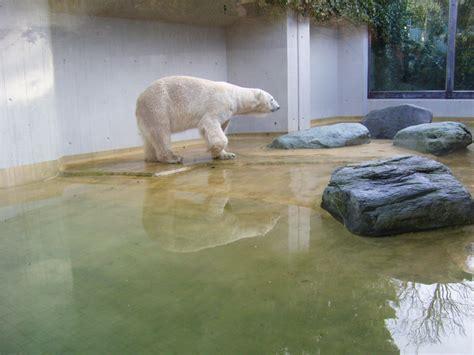 Zoologischer Garten Inder by Www Zoo Wuppertal Net Reinigung Der Eisb 228 Renanlage