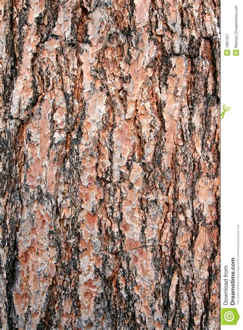 texture pine tree bark royalty free stock photography