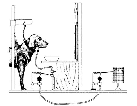 pavlovs dogs pavlov s in chapter 05 conditioning from psychology an introduction by russ
