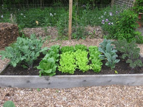 What To Plant For A Fantastic Fall Harvest Autumn Vegetable Garden