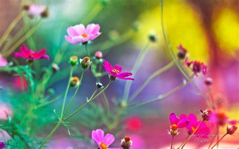 imagenes hermosas en 3d imagenes de flores hermosas en 3d