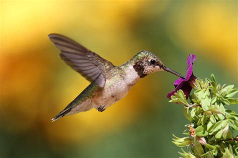 when to put up a hummingbird feeder in austin texas
