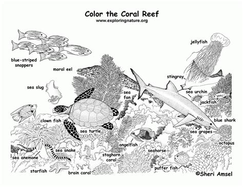 coral food coloring corals coloring page coloring home