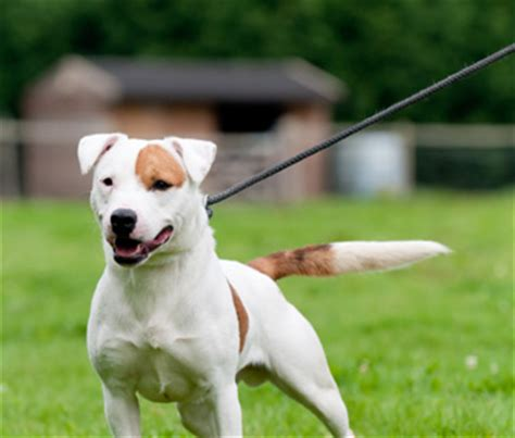 puppy pulling on leash how to stop your from barking and lunging at other dogs