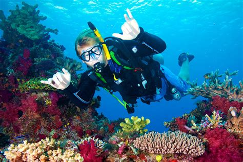 dive cozumel dive for beginners this is cozumel