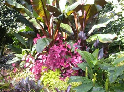 tropical plants for the garden cold hardy plants for that tropical garden effect