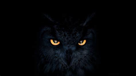 owl dark glowing eyes samsung galaxy note