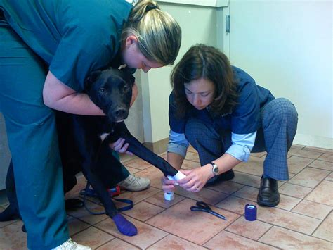 puppy vet visits how to make visits to your veterinarian go smoothly the balanced canine