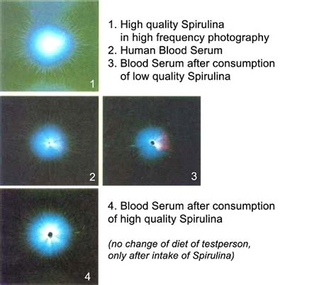 Superior Water Light And Power by What Is Spirulina Organics