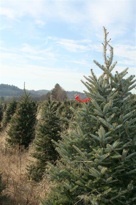 buy local buy a real christmas tree