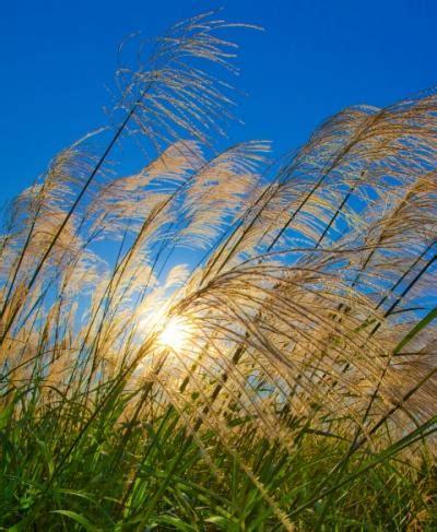 artificial sunlight l for plants hydrogen fuel from sunlight eurekalert science