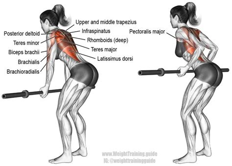 43 best images about back exercises on
