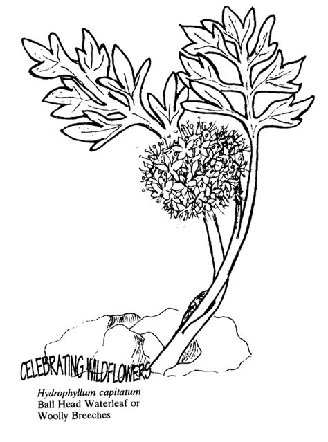 underwater plants coloring pages ocean plant clip art 32