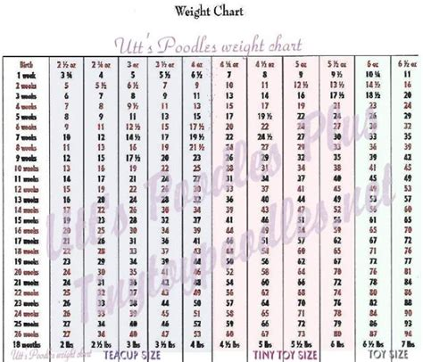 puppy height and weight calculator poodle height and weight chart dogs in our photo