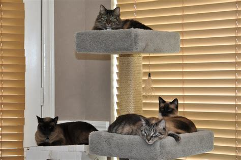 Cat Furniture by Indoor Cat Furniture Advice Focus On Useful Quality Product