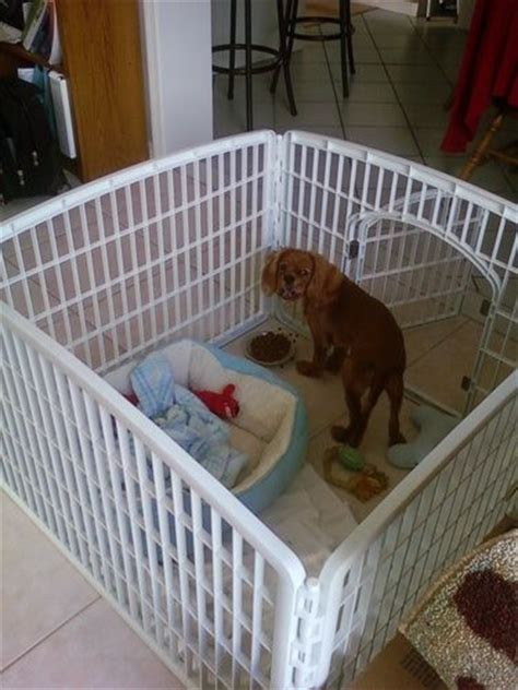 yorkie playpen 1000 ideas about puppy playpen on puppy schedule crate and