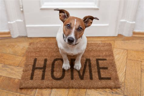 house smells like dog how to get rid of dog smell in your house cleanipedia