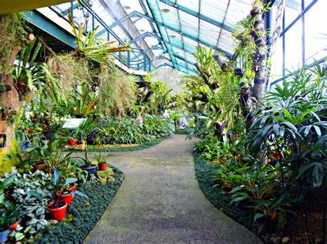 Bibit Anggrek Kebun Raya Bogor ternyata kebun raya bogor punya rumah anggrek dan
