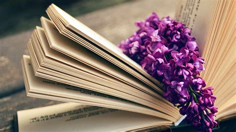 ni book read time flower flare purple wallpaper