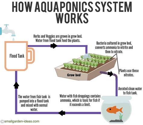 aquaponics systems  indoor gardening small garden ideas