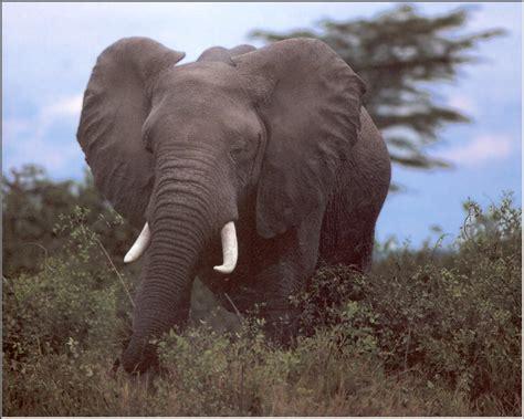 imagenes de animales la selva imagenes de animales de selva