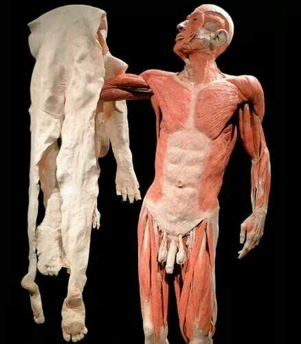 Human Skin Shedding by 8 Best Images About Macabre On Antiques