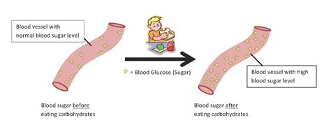 carbohydrates turn into sugar the basics