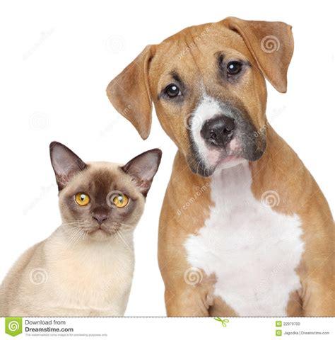 Retrato Del Gato Y Del Perro En Un Fondo Blanco Foto de