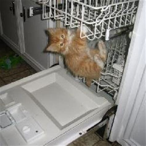 Cat Kitchen by I Left Cat In The Kitchen With The Dishwasher Open I