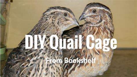 raising backyard quail raising backyard quail quail cage from old shelf doovi