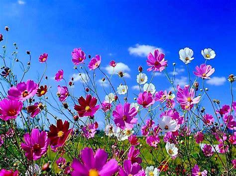 wallpaper desktop spring flowers spring season 2014 wallpapers hd free download unique